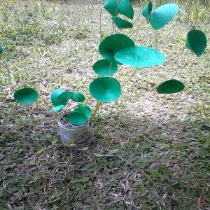 pilea en papier lubies de filles7